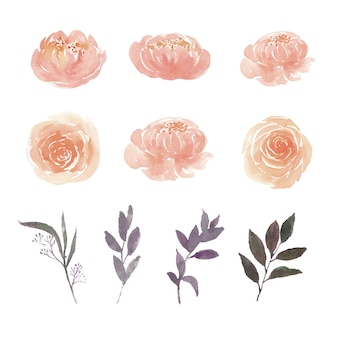 Set of watercolor peony, rose and foliage, illustration of elements isolated white.