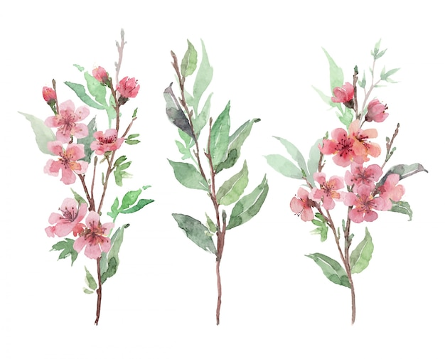 Set of watercolor pink blooming branches. cherry, apple blossom