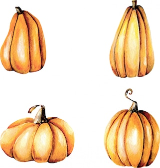 Set of watercolor pumpkins, hand painted isolated on a white background
