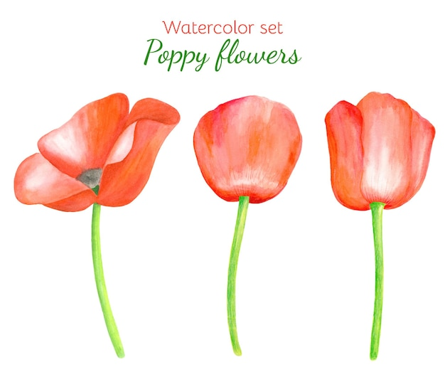 Set of watercolor red poppy flowers