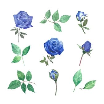Set of watercolor rose, hand-drawn illustration of elements isolated white.