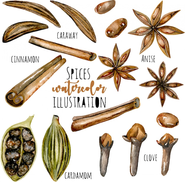 Set of watercolor spices (cinnamon, anise, caraway, cardamom and cloves)
