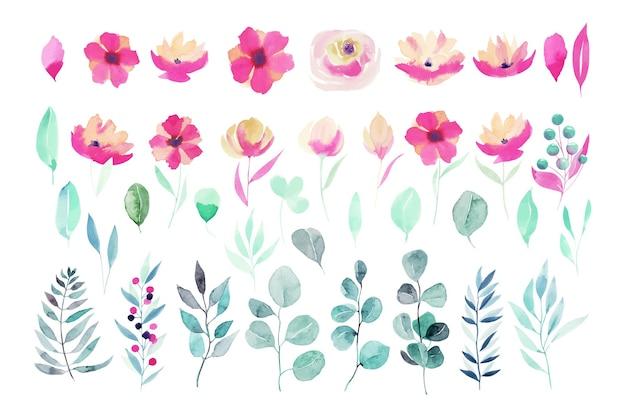 Set of watercolor spring plants pink flowers, wildflowers, green leaves, branches and eucalyptus