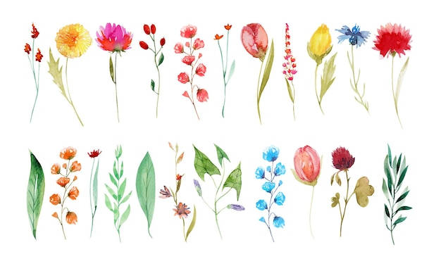 Set of watercolor summer wildflowers dandelion cornflower clover tulip hand painted isolated illustrations