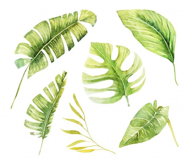 Set of watercolor tropical green plants and leaves, hand painted isolated illustration