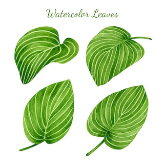 Set of watercolor tropical leaves