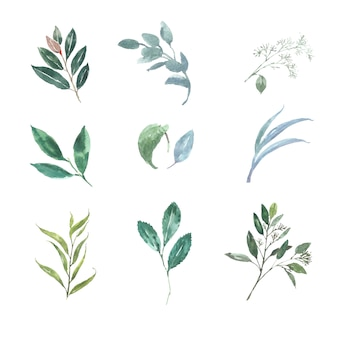 Set of watercolor various leaves, illustration of elements isolated on white.
