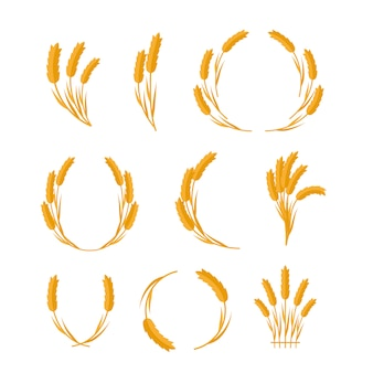Set of wheat ears vector concepts in flat design.