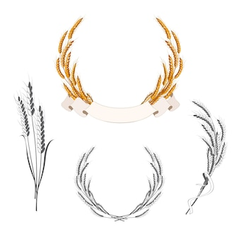 Set of wheat ears with banner and ribbon. decorative elements for bakery badges and logos