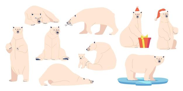다른 자세로 야생 북극 동물 육식 동물인 흰곰을 설정합니다. 산타 클로스 모자, 동물원 주민, 새끼와 엄마를 입고 giftbox를 들고 흰색 모피와 북극 생물. 만화 벡터 일러스트 레이 션