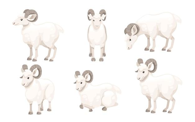 Set of white horned mountain ram sheep cartoon character design flat animal illustration
