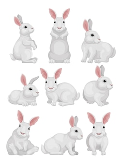 Set of white rabbit in different poses. adorable mammal animal. hare with long ears and short tail