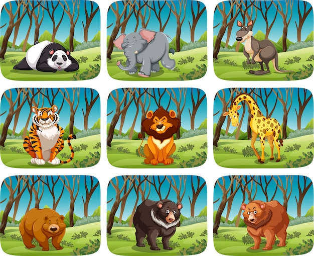 Set of wild animal in forest
