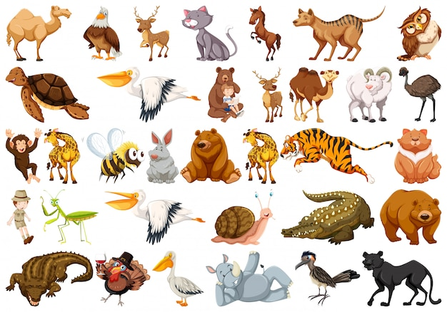 Set of wild animal