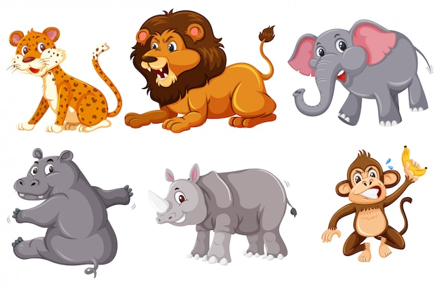 A set of wild animals on white background