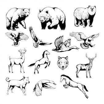 Set of wild animals with hand drawn vector illustration