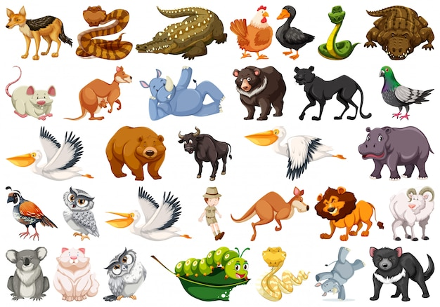 image relating to Free Printable Farm Animal Cutouts called Pets vectors, +143,000 free of charge information inside .AI, .EPS structure
