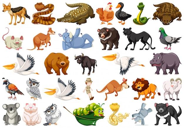 Animal Animal Shelter