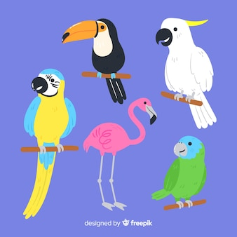 Set of wild birds: toucan, parrot, flamingo