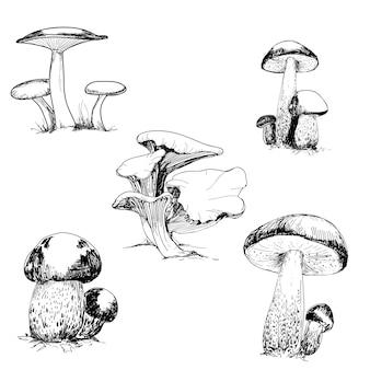 Set of wild mushrooms drawing