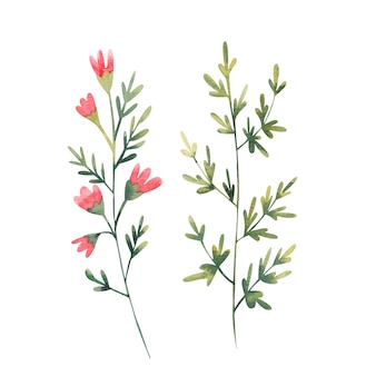 Set of wildflowers with red flowers watercolor illustration on white background