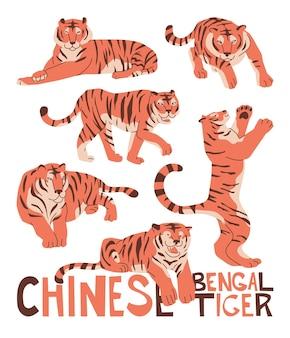 新年の装飾のための6つの中国のベンガルトラとセットアジアのお守り占星術の宗教