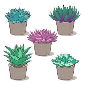 콘크리트 냄비에 아름다운 다육 식물로 설정