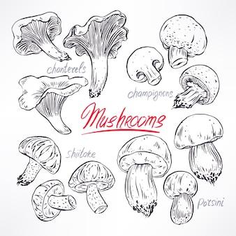 다양한 버섯 세트. 손으로 그린 그림