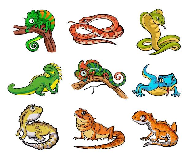 아름다운 다른 만화 파충류, 뱀과 도마뱀으로 설정합니다. 파충류가 있는 컬렉션, 뱀이 손으로 그린 그림. 월페이퍼, 포장, 엽서 및 포스터 디자인. 야생의 자연입니다.격리
