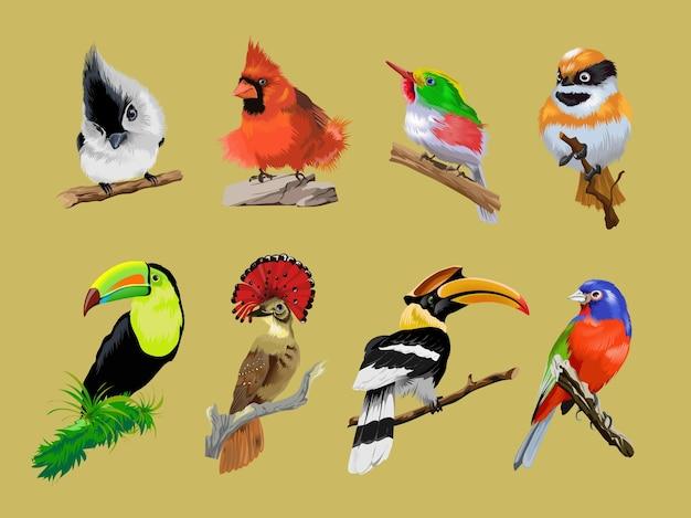 明るい熱帯の珍しい鳥がセットになっています。オオハシ、サイチョウ、カンムリコサイチョウ、多色の熱帯の明るい鳥。枝に座っているコロフルかわいい鳥のコレクション。孤立。