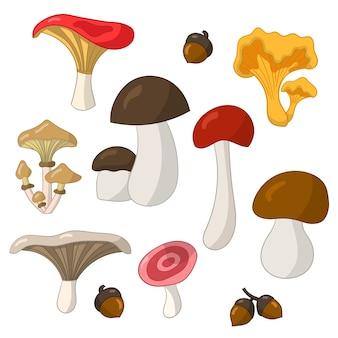 Набор с красочными съедобными грибами на белом фоне