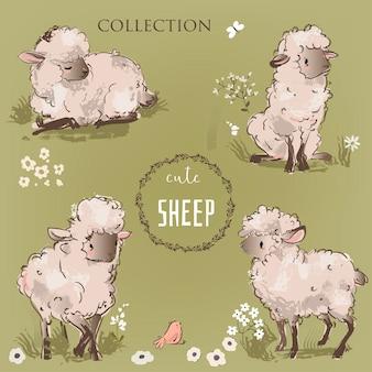 Набор милых овец. прекрасная коллекция векторных