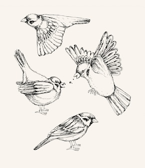 Set with different flying and sitting sparrow. hand drawn illustration.