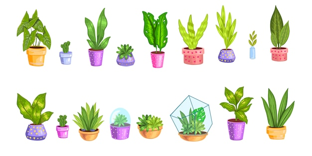 Set with different home plants. succulents, cactuses in florariums and pots.
