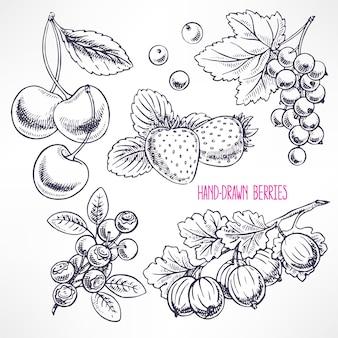 さまざまな熟したベリーと葉をセットします。手描きイラスト