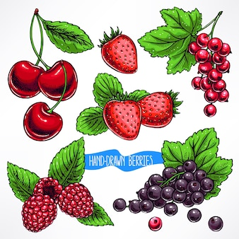 Set with different ripe berries and leaves. hand-drawn illustration