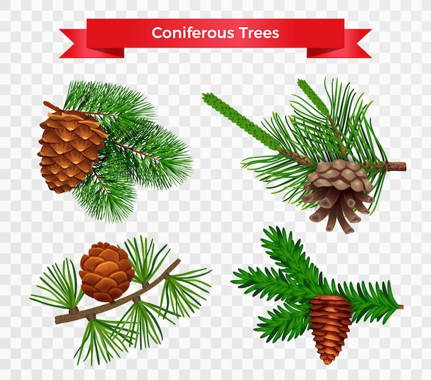 Set with pine tree cone isolated