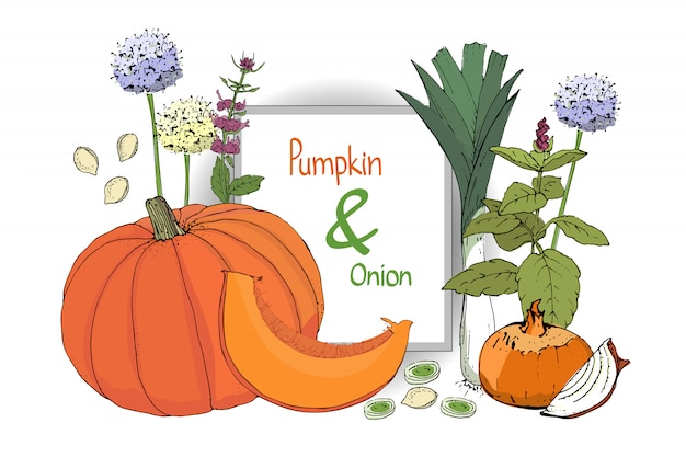 Set with pumpkin and onion. orange pumpkin and fresh onion.