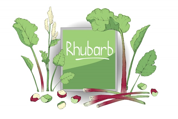 Set with rhubarb. fresh pieplant with green leaves.