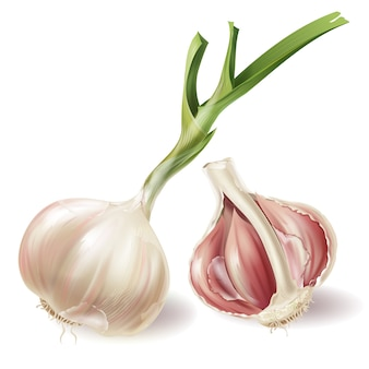 Set with sprouted head of garlic and half of bulb in peels, isolated on white background
