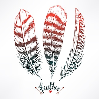 Set with three beautiful feathers. hand-drawn illustration