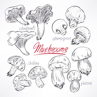 Set with a variety of mushrooms. hand-drawn illustration