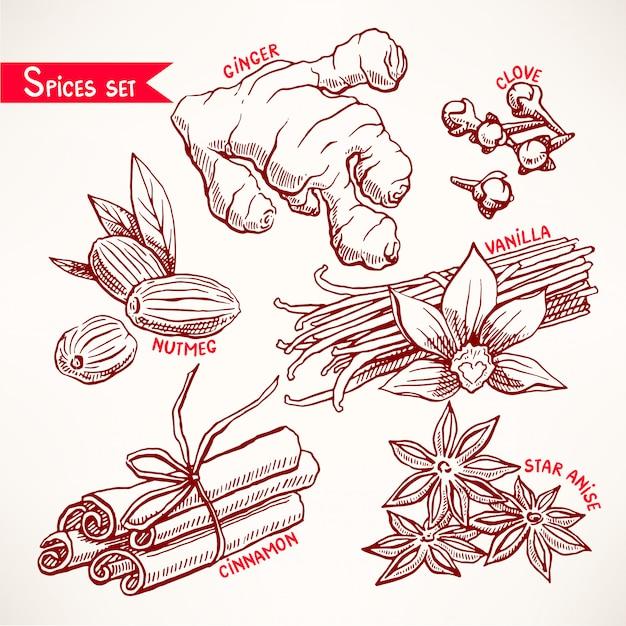 様々なスパイスをセット。スターアニス、生姜、ナツメグ。手描きイラスト