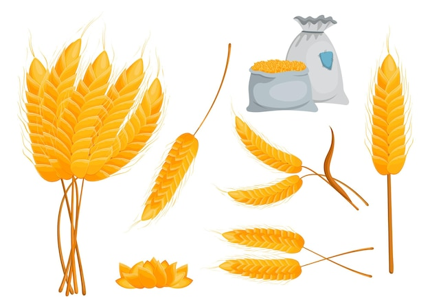 Set of yellow ripe spikes and grains. flat illustration