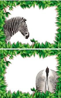 A set of zebra on nature frame