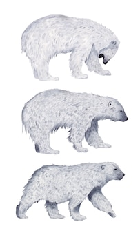 Seth polar bear in full growth profile watercolor isolated