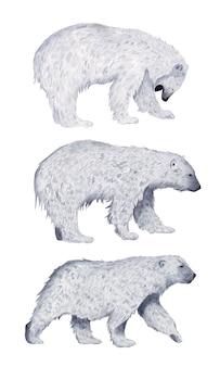 Сет белый медведь в полный рост профиль акварель изолированные