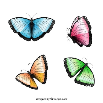 Several colored butterflies