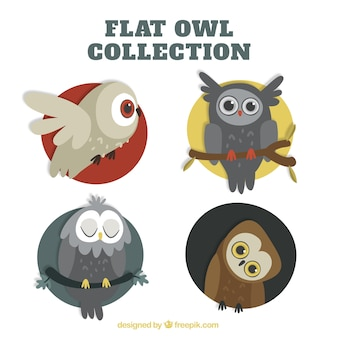 Several owls in different positions