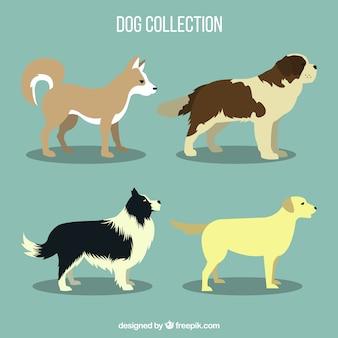 Several profile dogs